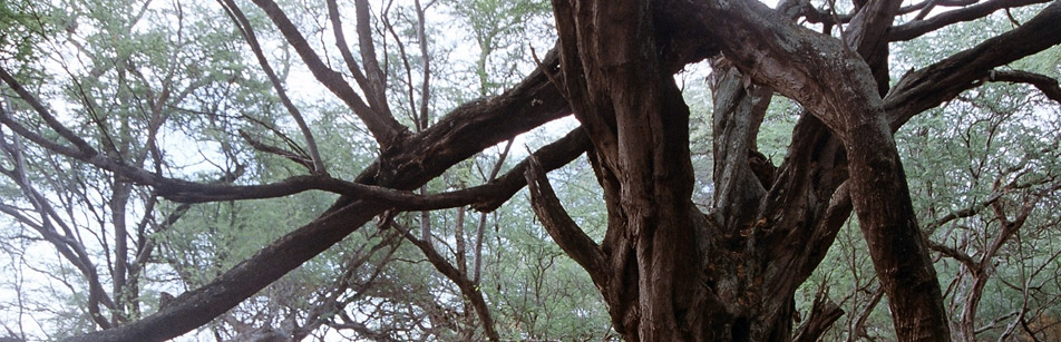 bannerYogabenttree